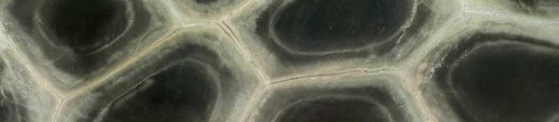 tartaruga (1)